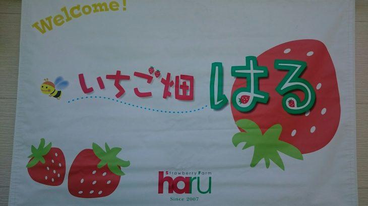 大阪府岸和田の「いちご畑はる」 ケーキやアイスも食べ放題で子供に大人気!!